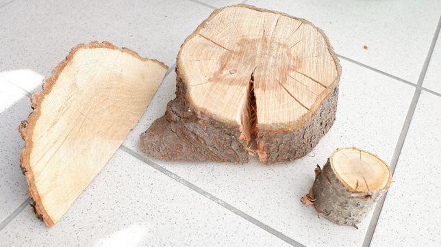 Śliwa, plastry drewna, NOWE