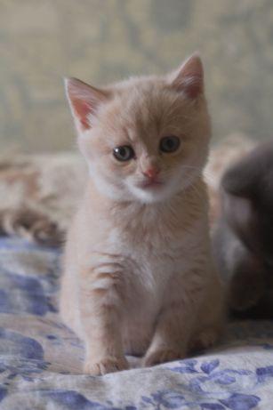 Киця, кошеня,кіт, кішечка