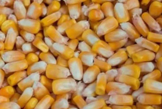 Продам зерно (сушене)