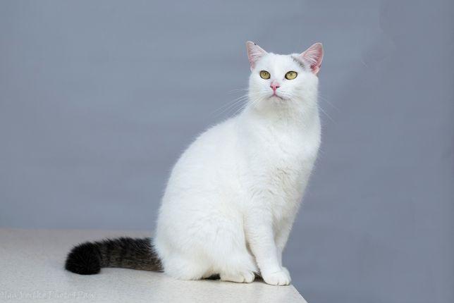Віддам в добрі руки дуже муркотливу молоду кішечку Іглу.