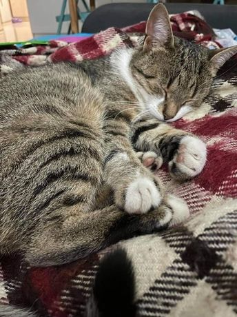 Zaginął kotek okoloca krowodrza kraków