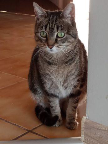 Szarusia, spokojna, dorosła koteczka