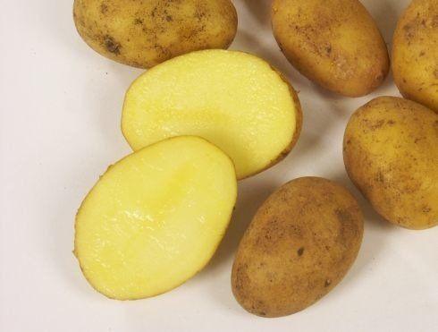 Ziemniak sadzeniak VINETA kwalifikat 2021 kalibraż 35-55mm