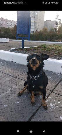 Пропала замечена собака ДД