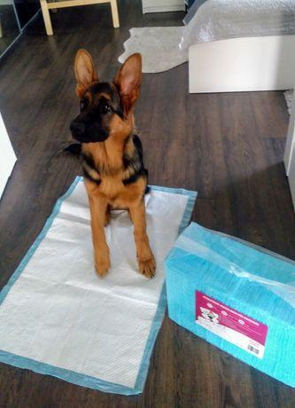Podkłady higieniczne dla szczeniaka