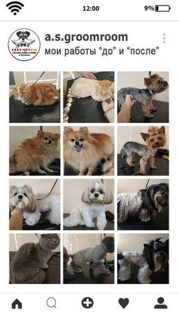 Стрижка собак и кошек по доступным ценам!