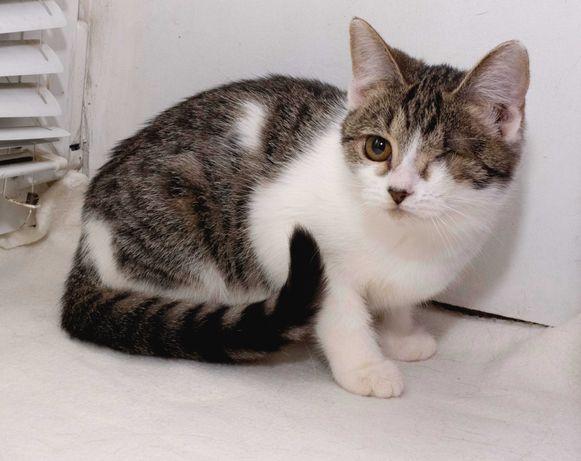 СРОЧНО в любящие добрые ручки котёночек Пелагея (3-4 месяца) ЛАСКОВАЯ