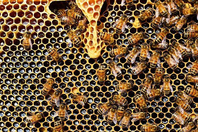 Продам мёд со своей пасики мёд из акаций и кориандра