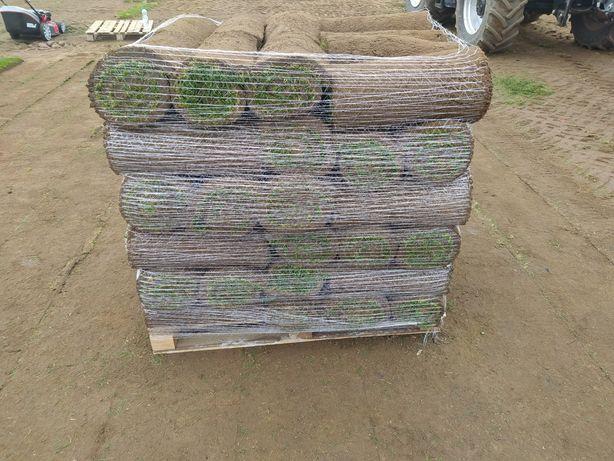 Trawnik rolowany/trawa z rolki
