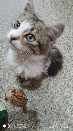 Красавчик котик!