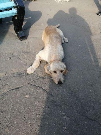 Добрая собака ищет заботливую семью