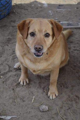 Ala Labrador Baddy