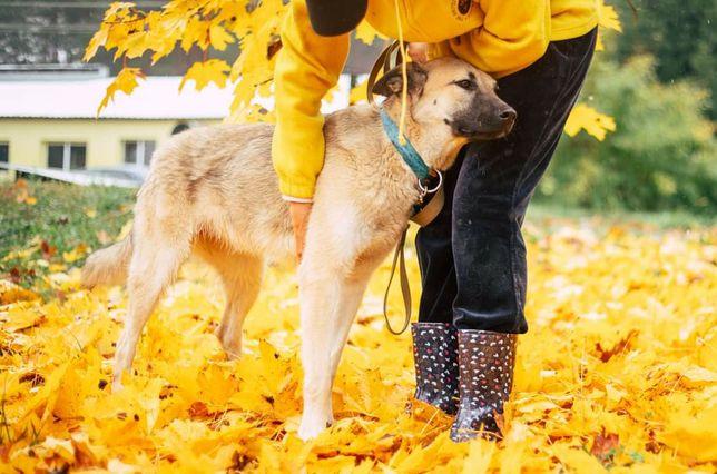 Шукаємо родину для чудо собачки