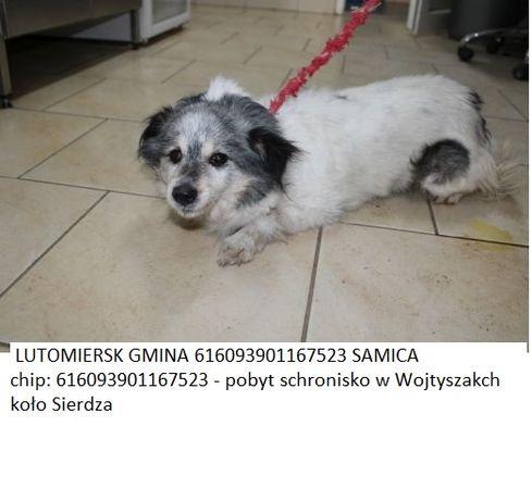 Lutomiersk zaginione psy