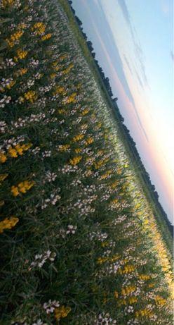 Dzierżawa gruntów ornych oraz łąk