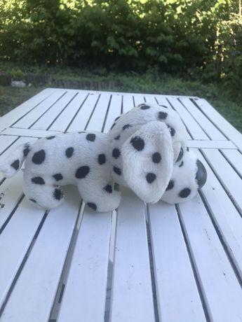 Piesek Dalmatyńczyk w idealnym stanie