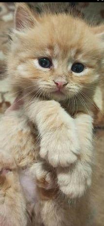 Отдам в хорошие руки котёнка девочка