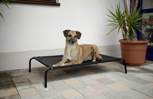 NOVO! Cama suspensa para Cão 107 x 65 x 20 cm