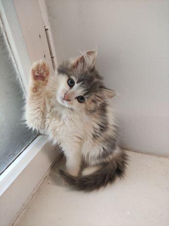 Крошечка котёночек Шунечка (3месяца) ласковая девочка