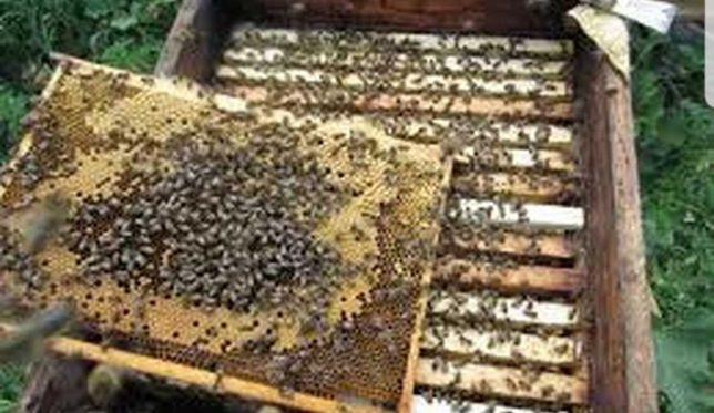 Пчелопакеты в наличии
