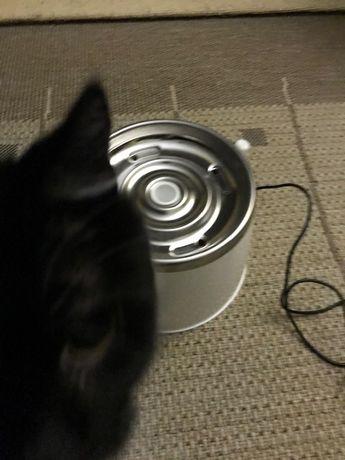 Bebedouro para Gatos e Caes