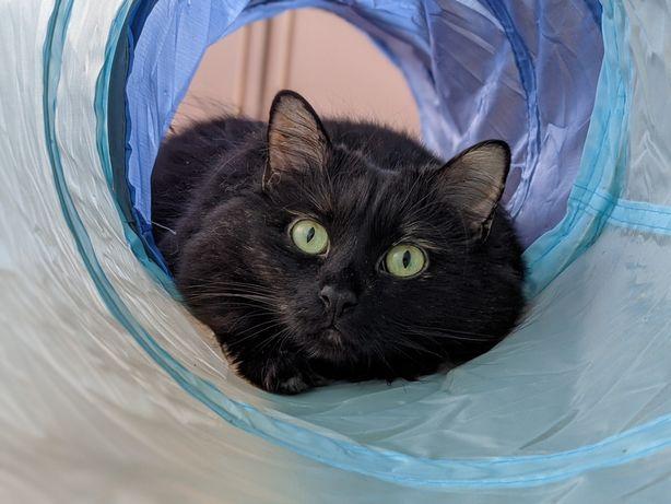 Тоннель игровой для котов