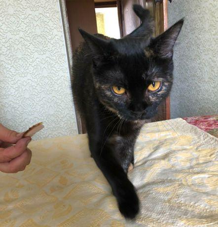 Кошка черепашка 1год стерилизована, привита, в добрые руки, котёнок