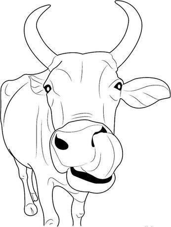 Продам быка на мясо