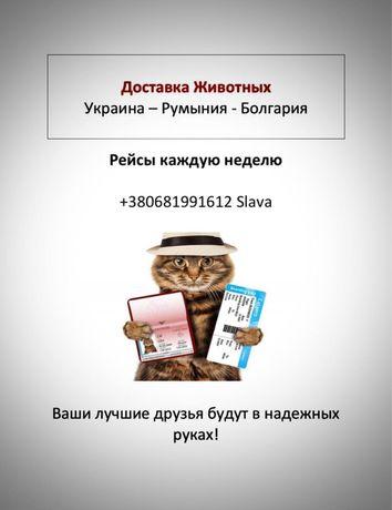 Перевозка животных в Румынию и Болгарию.