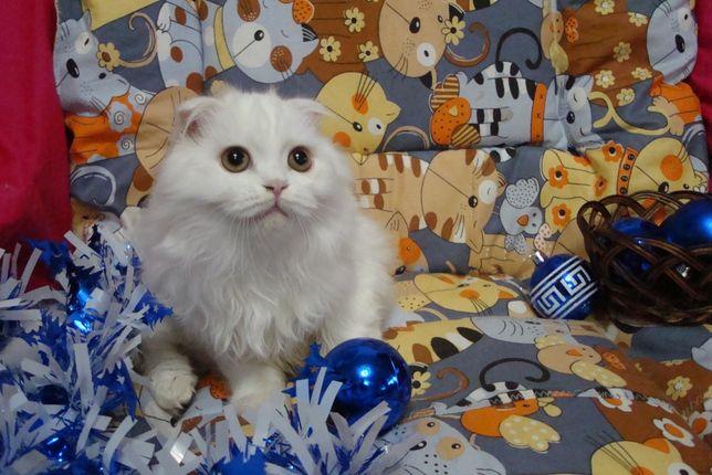 Белое облачко котик Челентано