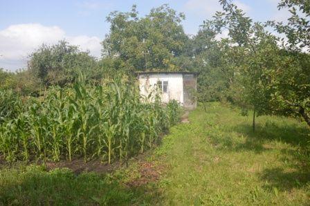 Продам земельну ділянку з садком в с. Кам'яна Гора в розстрочку