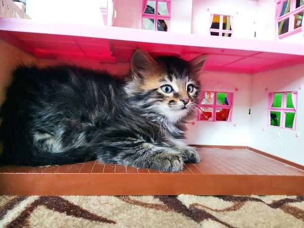 Пушистый котик котенок