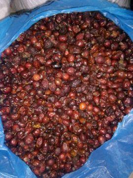 Лікарські ягоди: шипшини,глоду,тарнин , бузини