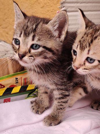 Gatinhos para adoção (o amarelo já tem dono)