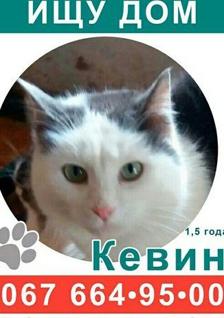 Срочно Ласковый красивый Котик Кевин ищет дом