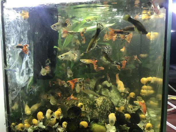 Акварім з рибками