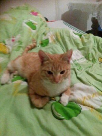 uwaga aleksandrow lodzki zaginał rudy kot aktualne