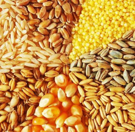 Продам зерно пшеницы,ячменя,кукурузы.Комбикорма