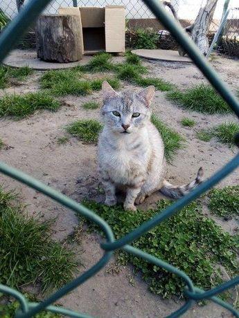 Sreberko - lubi towarzystwo człowieka i kotów