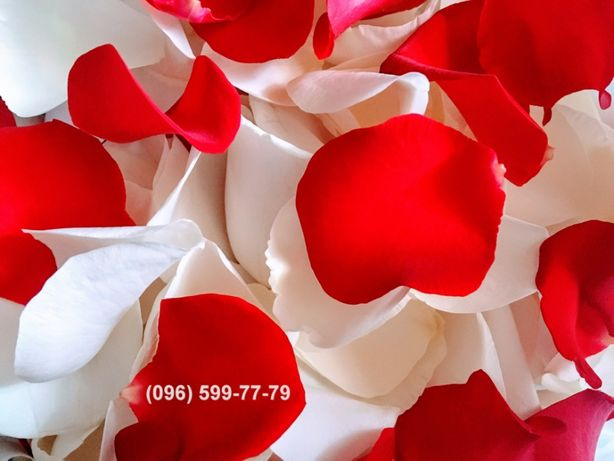 Лепестки роз для свадьбы