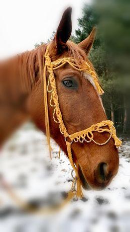 Kantar zdobiony, ogłowie dla konia do sesjii