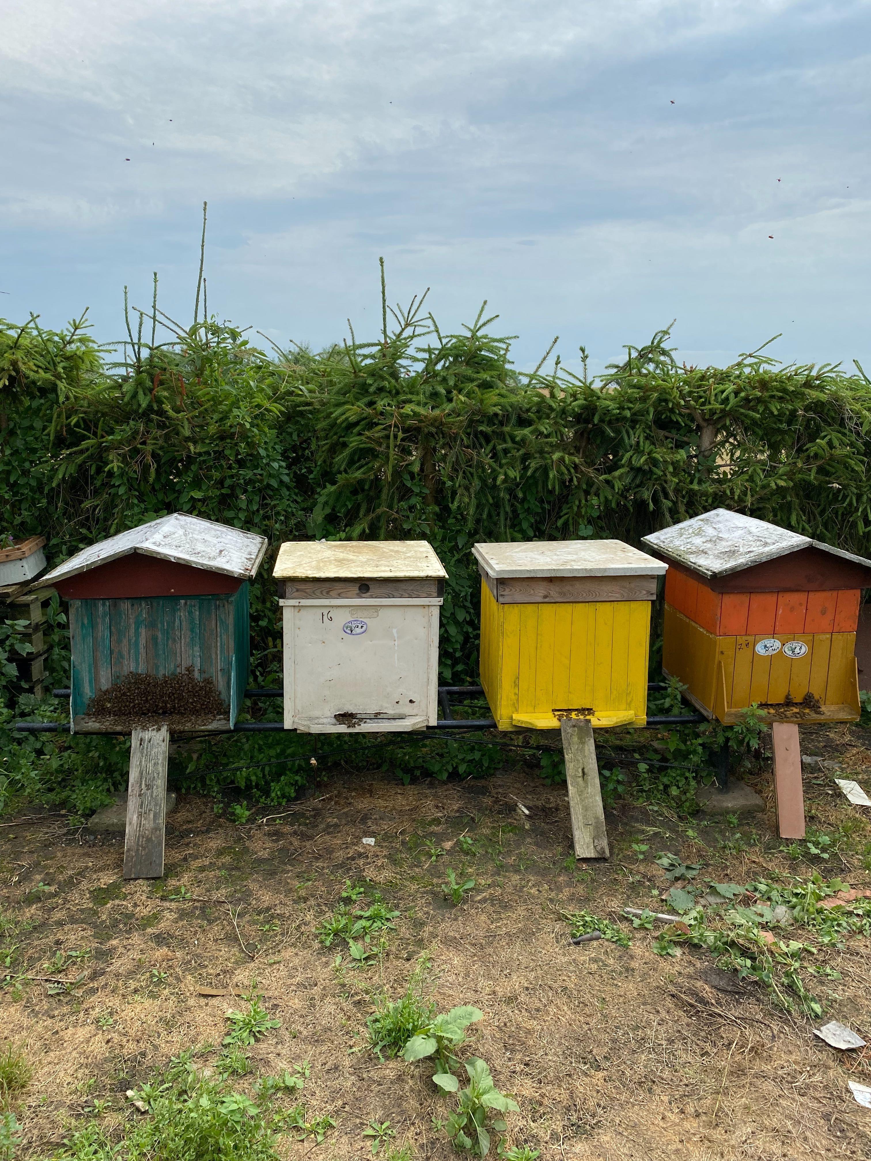 ule z pszczołami