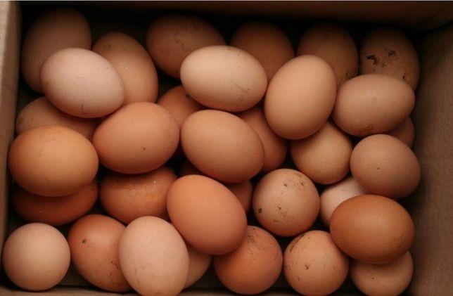 Продам свіжі домашні курячі яйця!!!