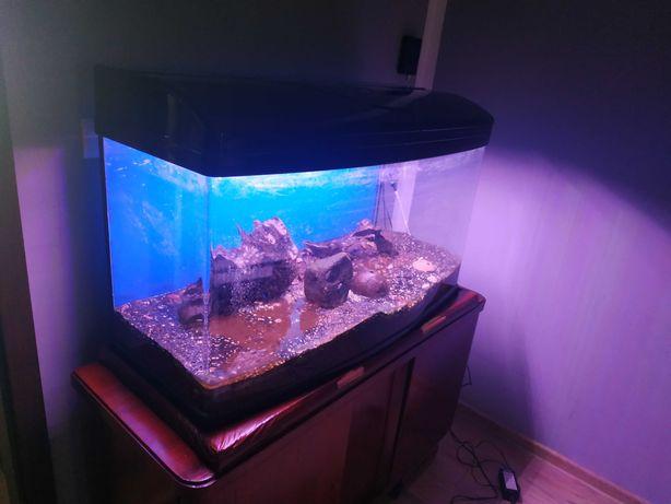 Akwarium 200l z pokrywa Ledy