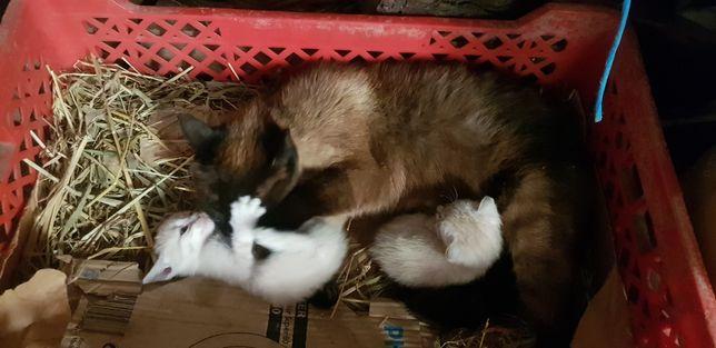 Dão se gatinhos bebés
