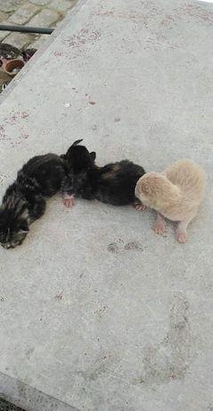Gatinhos (machos) para adoção