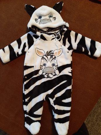 Махровый человечек зебра