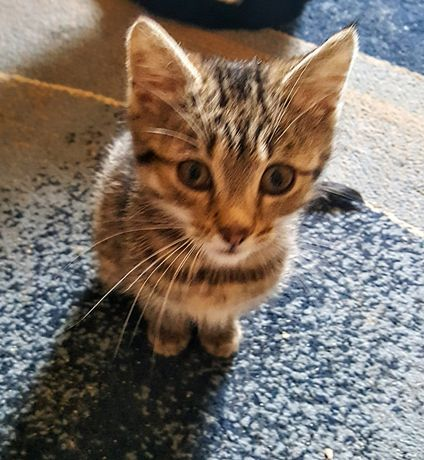 Котенок девочка 3 месяца