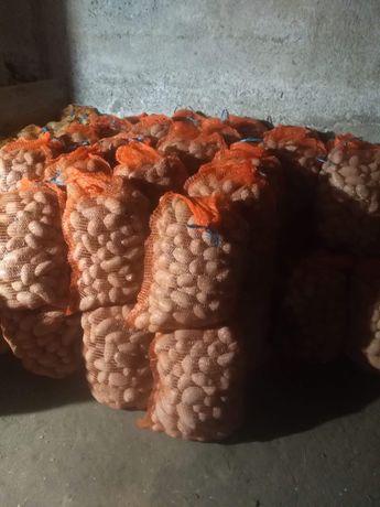 Ziemniaki Laura i Bellarosa z dowozem pod dom