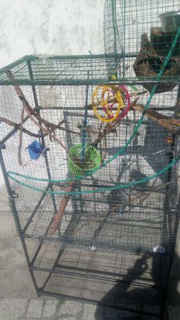 Duza klatka dla papug